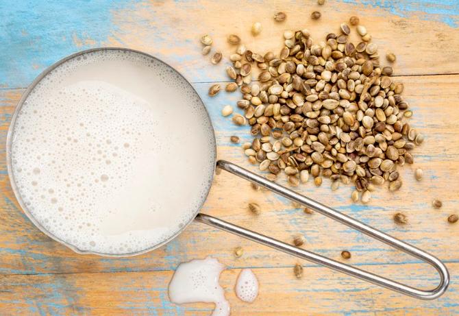 Сделать молоко конопли приготовления конопля молоко