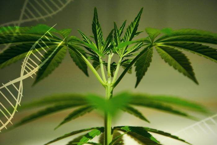 Марихуана скайп марихуана когда созреет