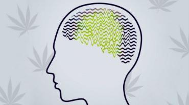 Эпилепсия и конопля зачем обдувать коноплю